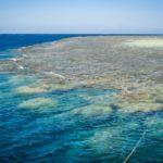 Tauchsafari in Ägypten, entdecke eine grandiose Unterwasserwelt!