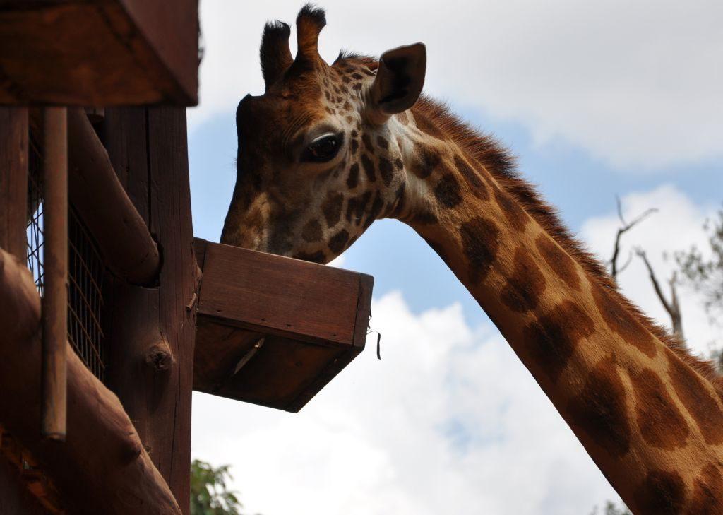 Kenia, Safari, Kenia, Safari, Reisetipps