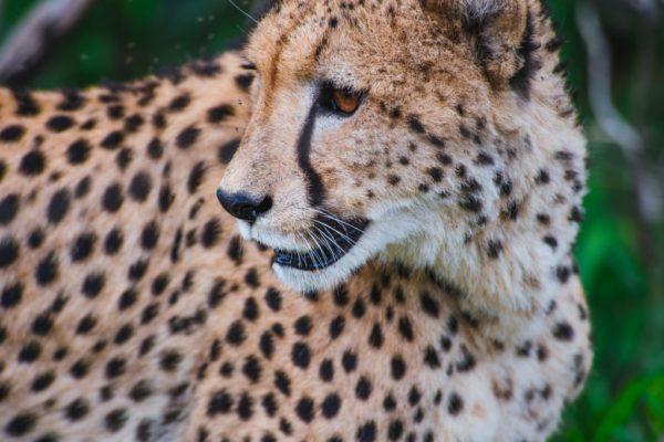 Kenia, Safari, Reisetipps