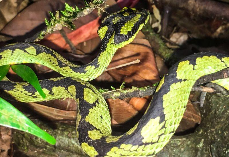 nterwegs im Sinharaja Regenwald, meine Highlights Sri Lanka