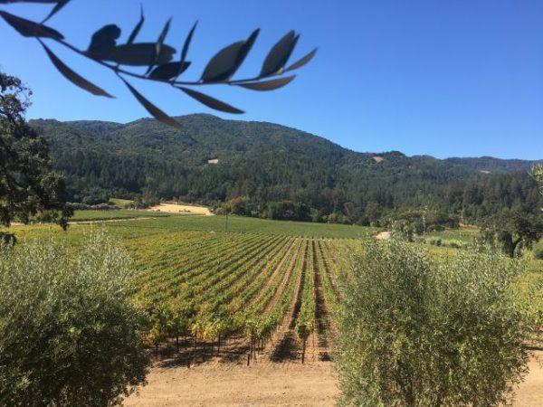 Wein, Napa, Reisebericht, Kalifornien
