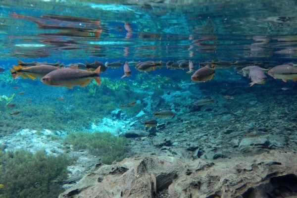Den Magpupungko Pool auf Siargao (Philippinen) solltest du nicht verpassen!