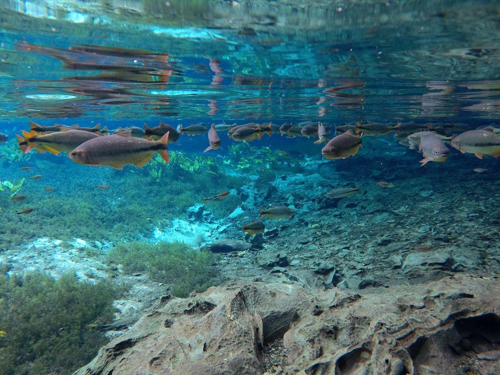 Magpupungko – der natürliche Infinity Pool auf Siargao Island