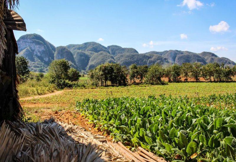 Das Vinales Tal solltest du auf einer Rundreise keinesfalls verpassen: