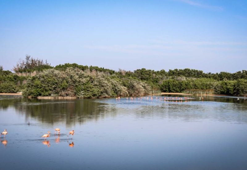 Nördlich des Festlandes und über Brücken verbunden, liegt der Archipel Jardines del Rey (Gärten des Königs). Cayo Coco, Cayo Guillermo, Cayo Paredon Grande und Cayo Romano bilden die die über 600 Kilometer lange Inselkette an der Nordküste Kubas.