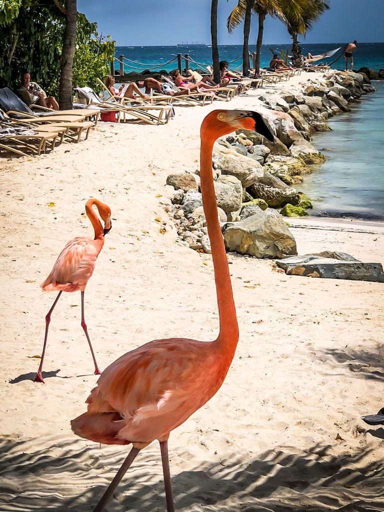 Renaissance Island, Flamingo Beach