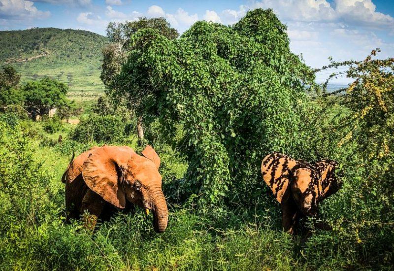 Safari in Kenia, entdecke Ostafrika. Kosten in Kenia verrate ich dir ebenfalls.