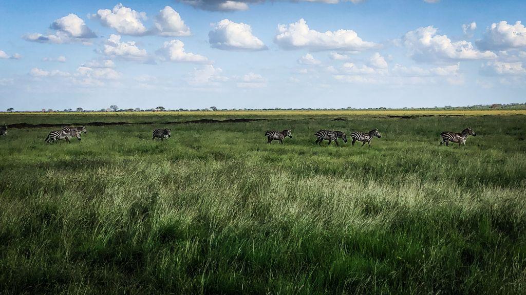 Safari in Kenia – Planen, buchen, ab ins Abenteuer!