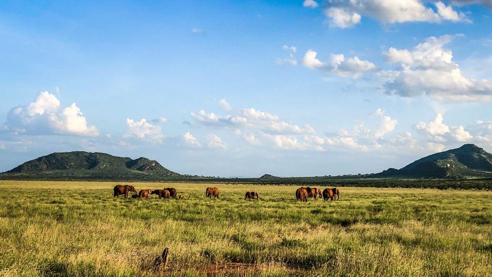Safari in Kenia, entdecke Ostafrika. Was kostet eine Safari?