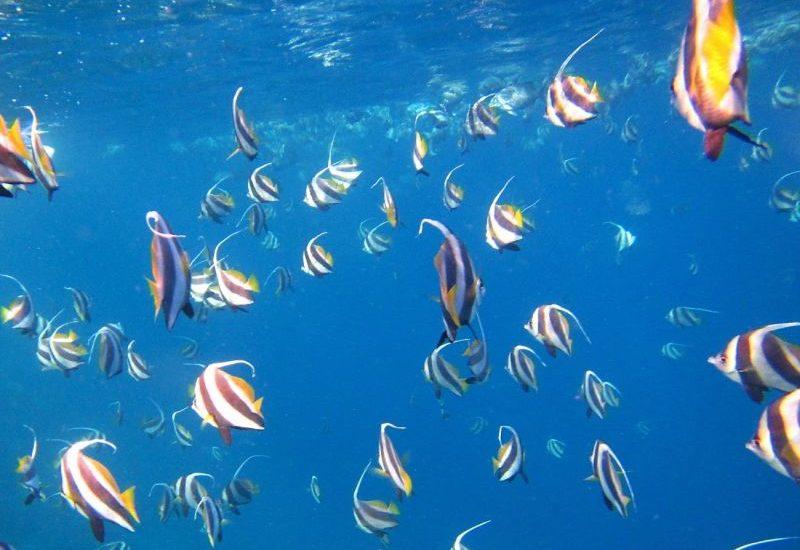 Entdecke die Malediven und die faszinierende Unterwasserwelt.