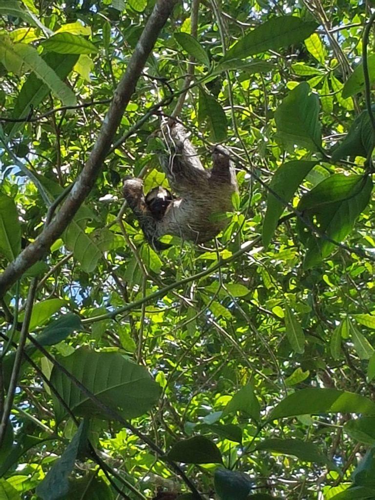 Costa Rica, Besuch eines Regenwaldes