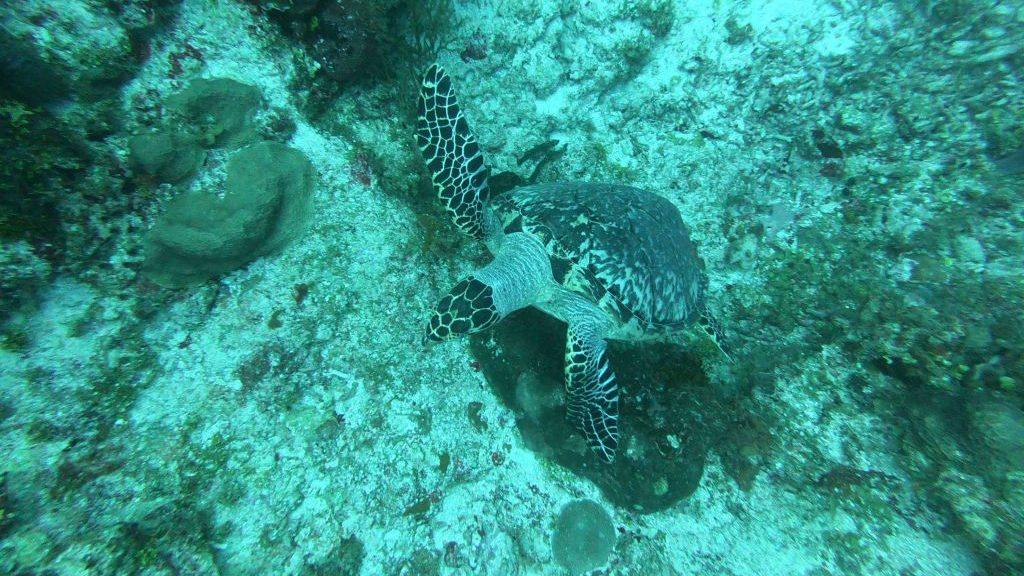 Costa Rica - Tauchen in einer wunderbaren Unterwasserwelt